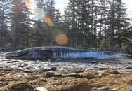 Cá voi chết hàng loạt khiến người dân hoang mang
