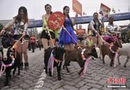 Dắt dê đi diễu hành để chào đón năm mới Ất Mùi