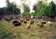 Hỗn chiến vì con lợn, hàng chục người thương vong