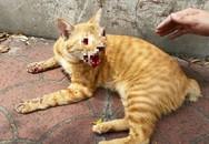 Chú mèo bị bạo hành dã man khiến cộng đồng mạng phẫn nộ