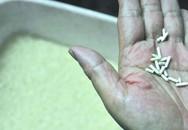 Hãi hùng gạo Trung Quốc làm bằng giấy