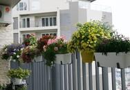 Vườn ban công bảy sắc ở tầng cao chung cư Hoàng Đạo Thúy