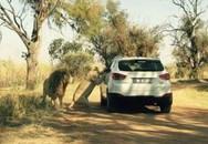Bức ảnh cuối gây sốc của du khách bị sư tử vồ chết trong công viên