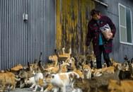 """Kỳ lạ """"vương quốc"""" có 22 người dân và 120 con mèo"""