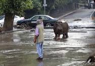Thành phố náo loạn vì thú dữ tràn ra đường sau lũ lụt