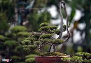 Vườn kiểng tiền tỷ của nghệ sĩ xiếc Hà thành