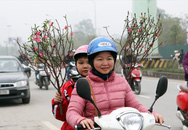 Thời tiết khô ráo, dân Hà Nội tất bật đi mua cây cảnh bày Tết