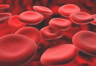 Chỉ 40% bệnh nhân rối loạn đông máu được chăm sóc thường xuyên