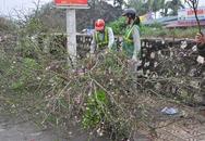 Hà Nội: Đào thế nở bung bét, dân buôn vừa bán vừa vứt