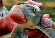 Bỏ hơn chục triệu để chia nhau miếng sụn môi cá Anh Vũ
