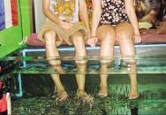 Thực hư tin đồn cá massage truyền bệnh HIV, viêm gan C