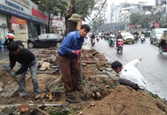 Hàng loạt sở, ngành phải chịu trách nhiệm vụ chặt 6700 cây xanh