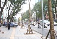 Sẽ công khai trách nhiệm vụ chặt hạ cây xanh ở Hà Nội