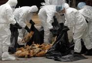 Cảnh báo sự thay đổi của virus cúm