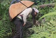 Truy tìm chủ nhân khúc gỗ lao từ trên núi, đè chết người đi đường