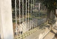 Lập đoàn kiểm tra sau vụ hổ cắn đứt tay nữ du khách