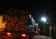 Bắt hàng loạt xe chở gỗ keo quá tải