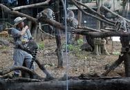 Vườn thú bán hoang dã lớn nhất Việt Nam mở cửa