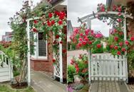 Ngắm vườn hoa đẹp mê ly của gia đình người Việt ở Đức