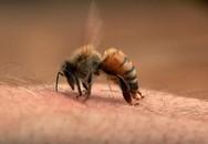 Hà Nội: Hơn50 học sinh tiểu học bị ong đốt phải nhập viện