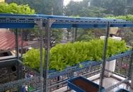 Chàng trai 9X làm giàu từ mô hình trồng rau trên sân thượng
