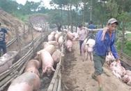Nông dân lại lao đao vì thương lái Trung Quốc ngừng thu mua