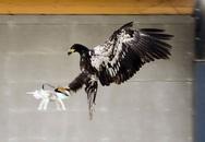 """Hà Lan huấn luyện đại bàng để """"diệt"""" drone"""