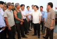 Lập đường dây nóng hỗ trợ ngư dân 4 tỉnh có cá chết