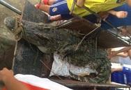 Bắt được cá sấu hơn 70kg ở hồ câu nổi tiếng Hà Nội