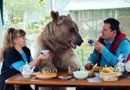 Cặp vợ chồng sống chung nhà với gấu suốt 23 năm