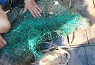 Cá sấu gây hoang mang ở sông Soài Rạp đã mắc lưới