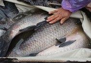 Em gái văn phòng, mỗi ngày bán nửa tấn cá, lãi 6 triệu
