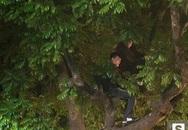 Khán giả liều mình leo lên cây cao khi xem Mỹ Tâm diễn đón năm mới