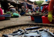 Dân không dám ăn cá biển, thịt lợn tăng giá mạnh