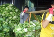 Thủ phủ rau Đà Lạt thiếu... cửa hàng rau an toàn