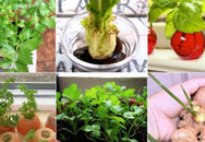 """10 loại rau trồng kiểu """"Thạch Sanh"""" giúp bạn ăn hoài không hết"""