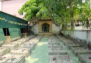 Độc đáo nghĩa trang thờ 100 con cá voi ở Nghệ An