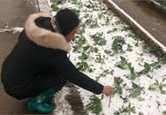 Người bị 'giời đày' giữa băng tuyết Sa Pa