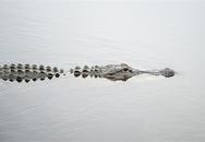 Tìm thấy thi thể bé trai bị cá sấu lôi xuống hồ