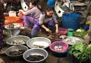 Nửa triệu đồng 1kg bong bóng cá dân Hà thành vẫn không đặt nổi mà ăn