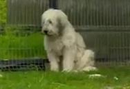 5 năm sau cái chết của chủ nhân, chú chó vẫn ngồi im đợi chủ quay về