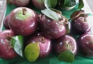 Ăn đã đời đặc sản ở các vựa trái cây Nam Bộ