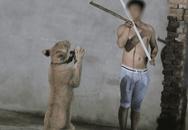 Clip tàn khốc, đẫm nước mắt khiến bạn không bao giờ muốn đưa trẻ đi xem xiếc thú nữa