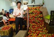 Sáng chế máy rửa, đánh bóng cà chua trong 20 ngày