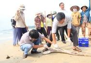Chuyên gia Đức, Mỹ, Israel kiểm tra xả thải ở Hà Tĩnh sau vụ cá chết hàng loạt