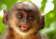 Những câu ca dao, tục ngữ hay về khỉ