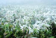Hà Nội có thể rét 6 độ C, vùng núi xuất hiện băng giá