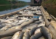 """Vụ cá chết trên sông Bưởi: Phạt """"thủ phạm"""" gần 500 triệu đồng"""