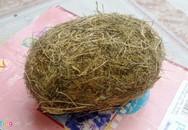 Tiếp tục phát hiện cát lợn gây xôn xao ở Nghệ An