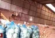Đường đi của rau bẩn gắn mác rau an toàn vào siêu thị